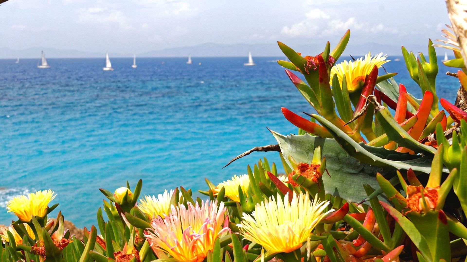 Rodo salos gamtos grožis užburia