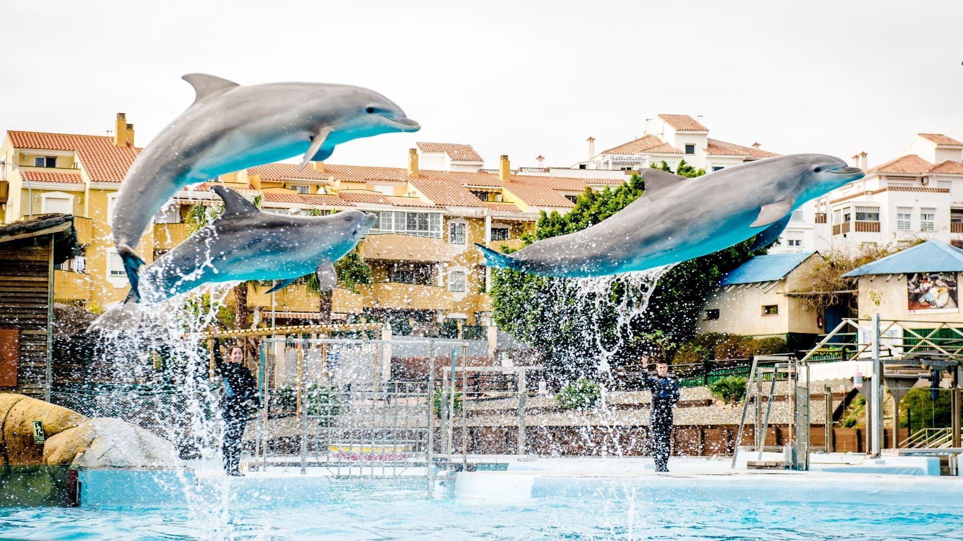 Delfinų pasirodymas Benalmadenoje