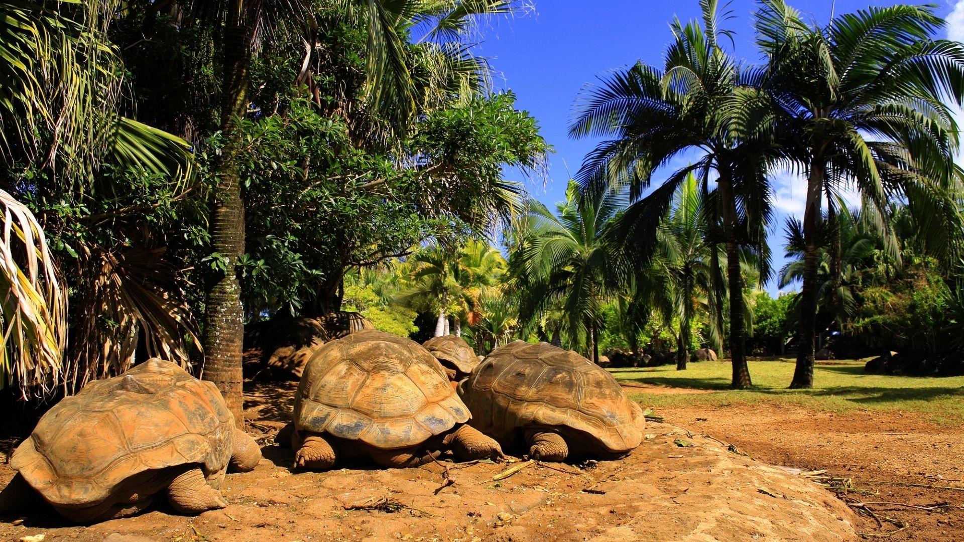 Didieji vėžliai po Mauricijaus saule