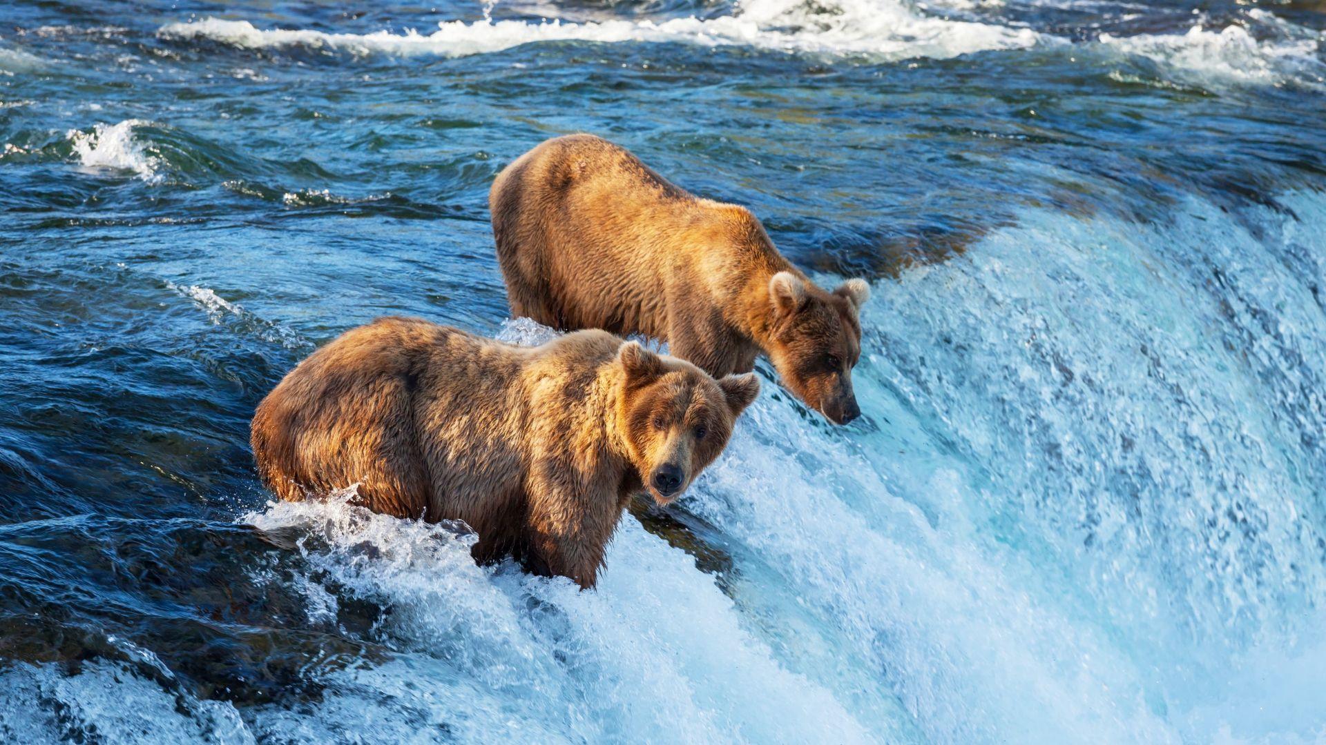 Keliaujant galima pamatyti ir grizlius
