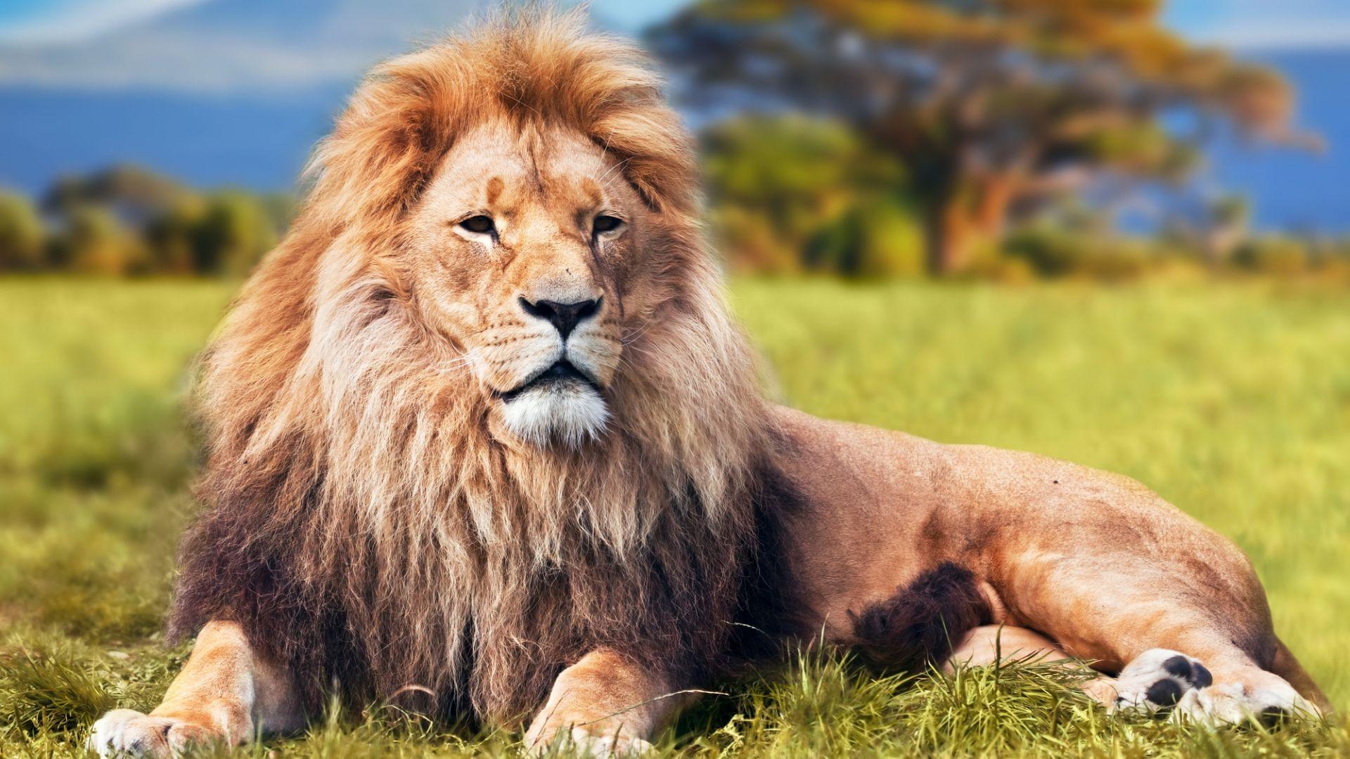 Nuostabūs laukinės gyvūnijos karaliai