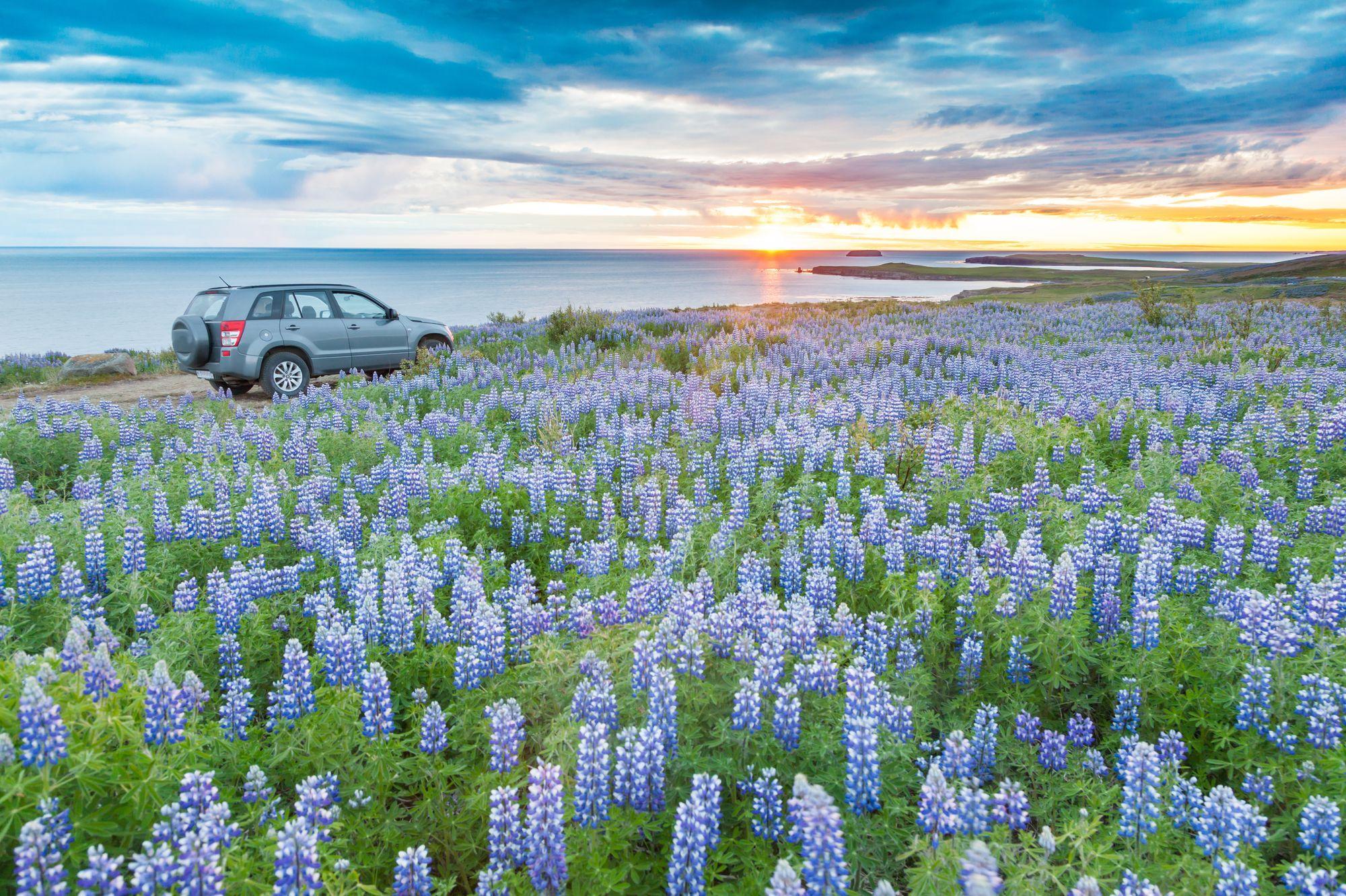 Kelionė po Islandiją automobiliu