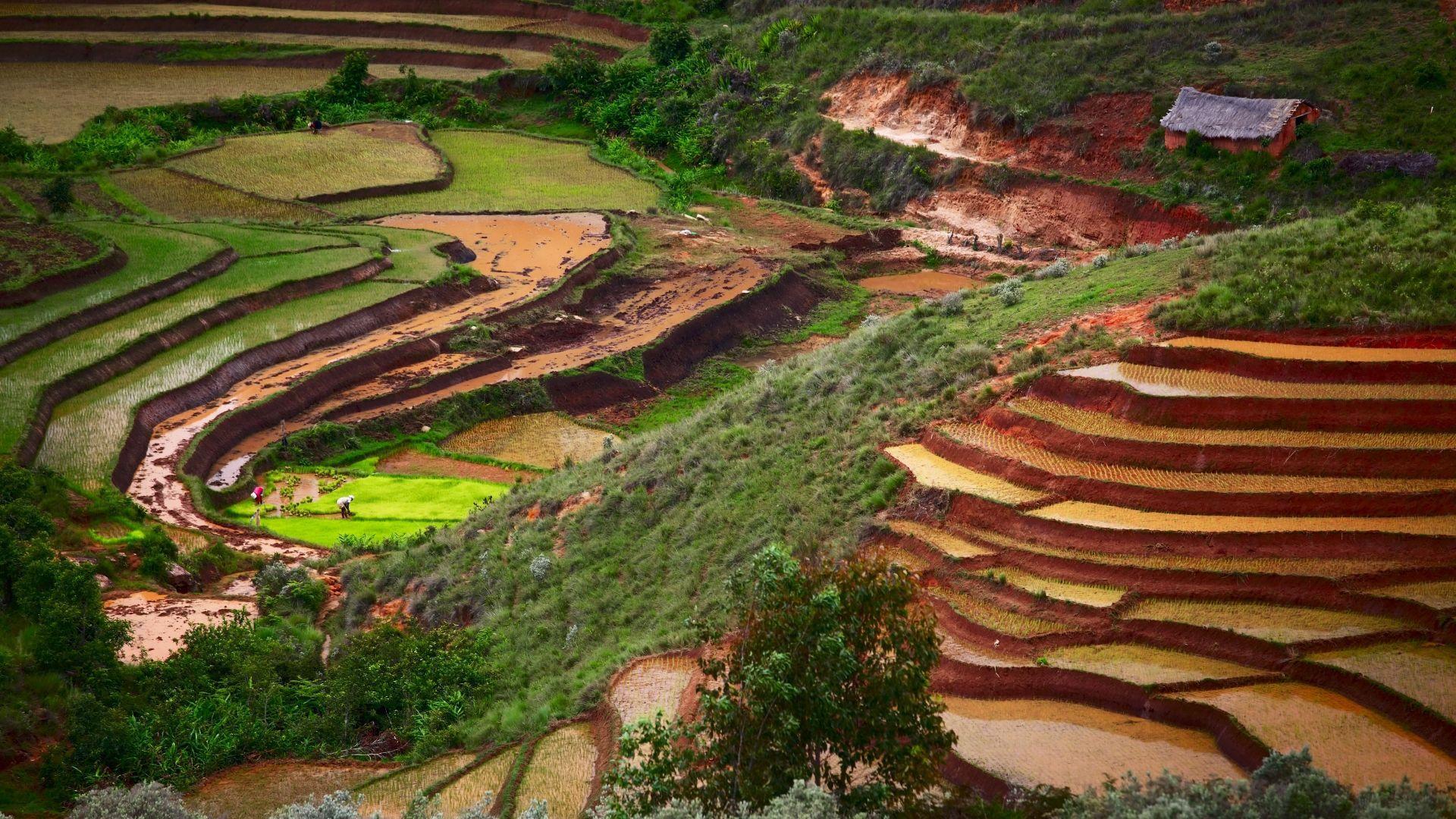 Madagaskaro kraštovaizdis