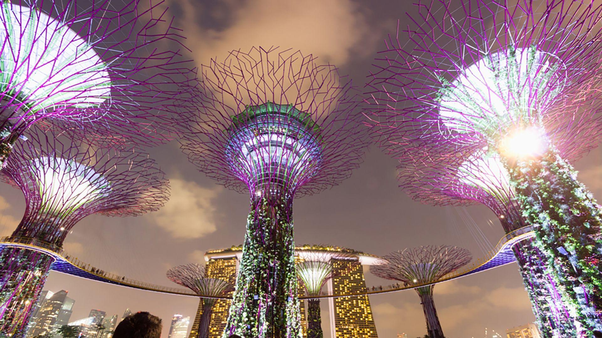 Singapūro botanikos sodas