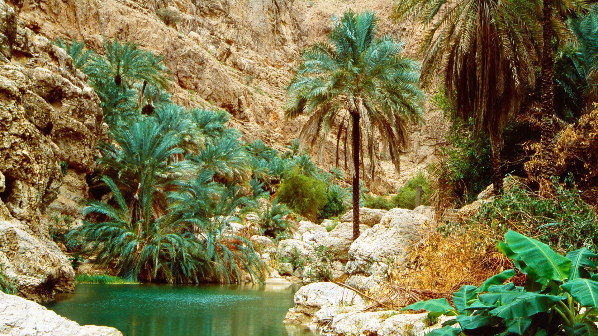 Kelionės į Omaną metu aplankykite įspūdingąjį Vadi Šabą