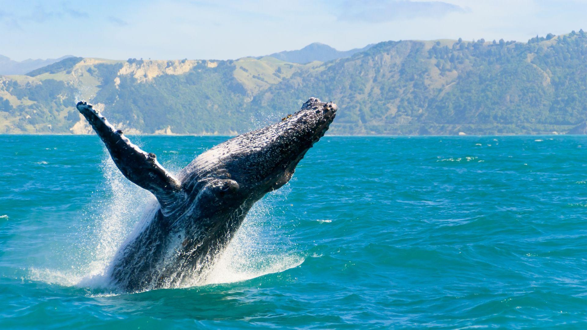 Ekskursijų metu stebėkite banginius