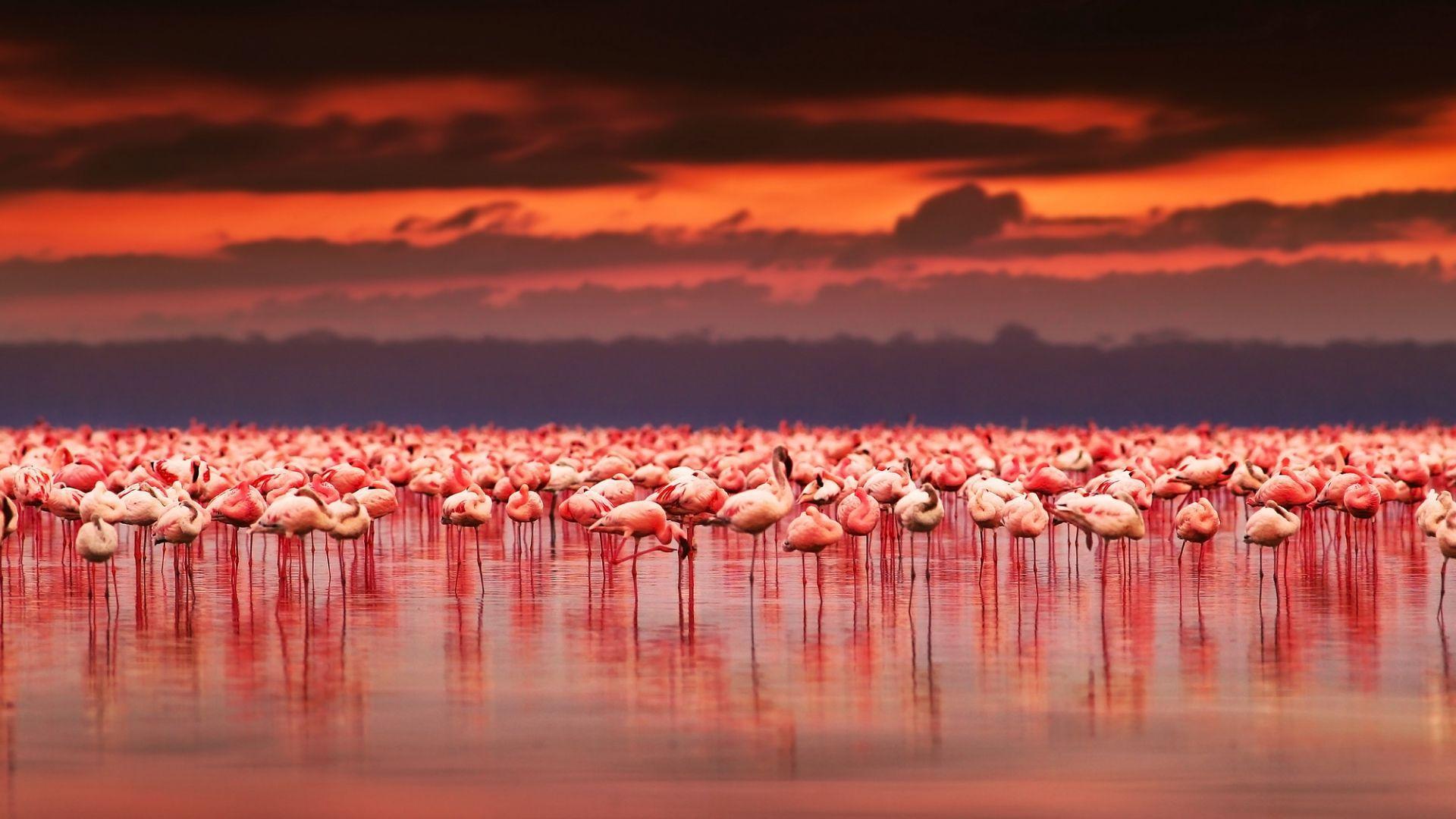 Žavingieji flamingai