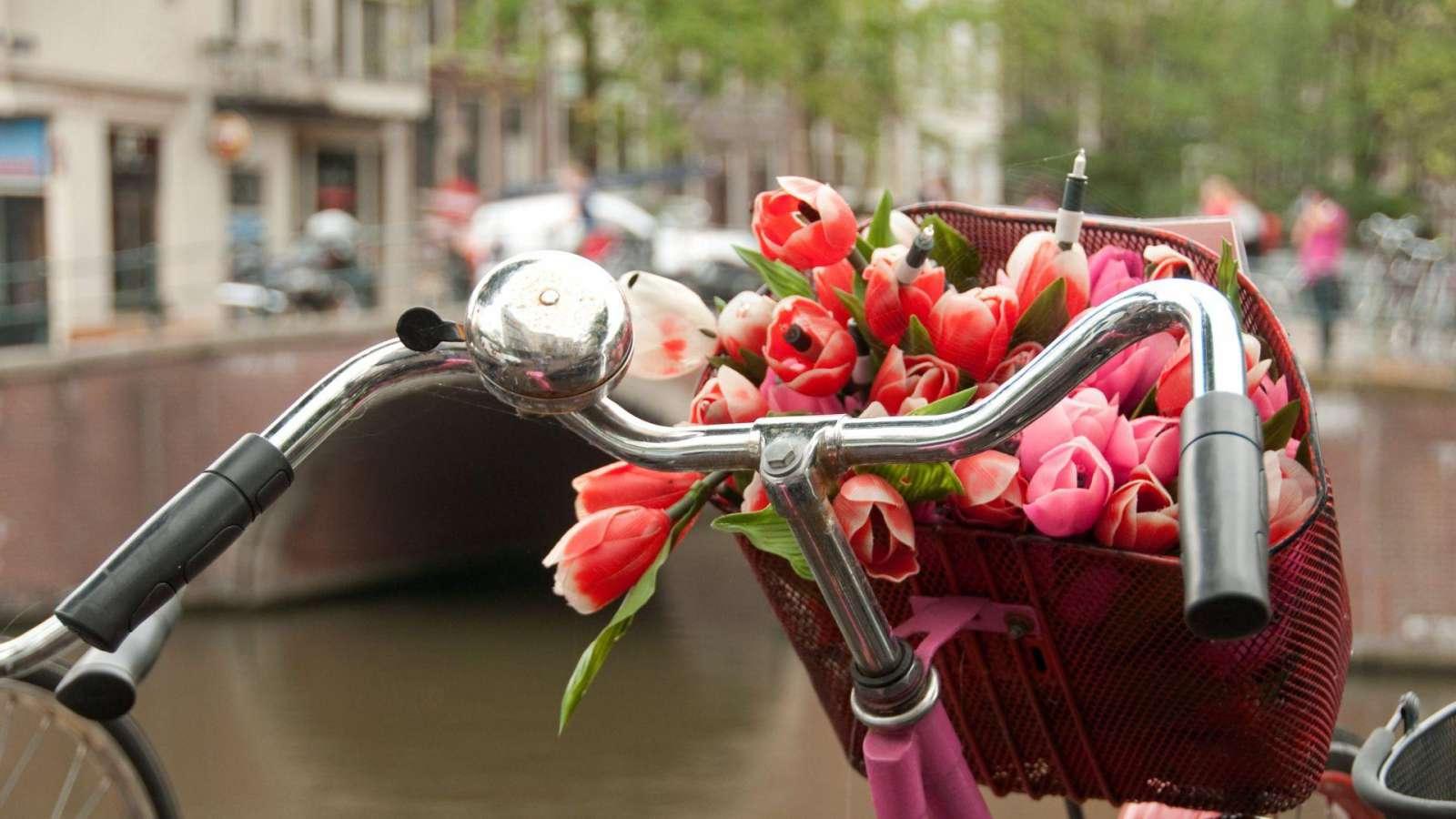 Nuo Olandijos neatsiejami du simboliai - dviračiai bei tulpės