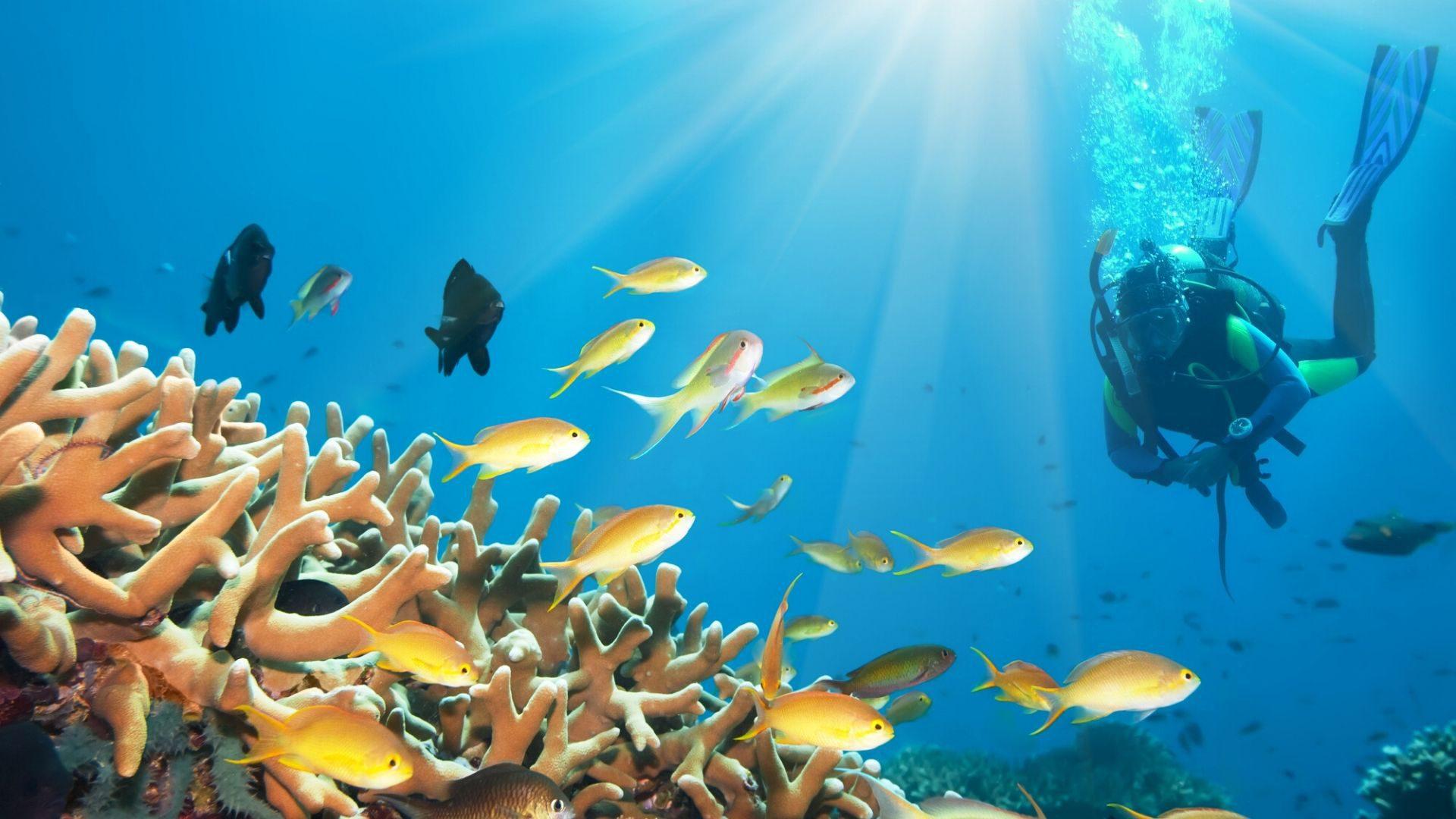 Ilsintis Punta Kanos kurorte rekomenduojame leistis į nardymo nuotykį