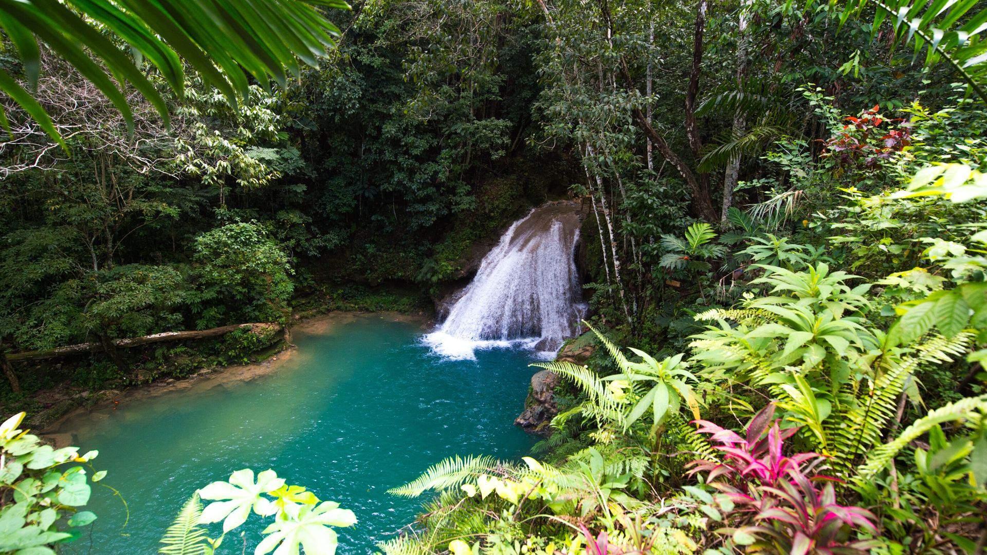 Jamaikoje išvysite gražiausių laukinės gamtos vietų