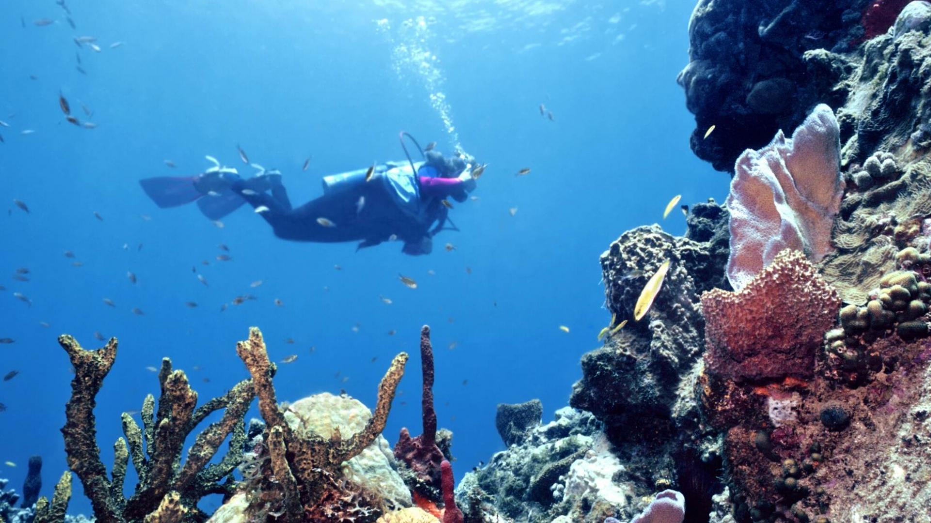 Keliautojus Belize žavi įspūdingas povandeninis pasaulis