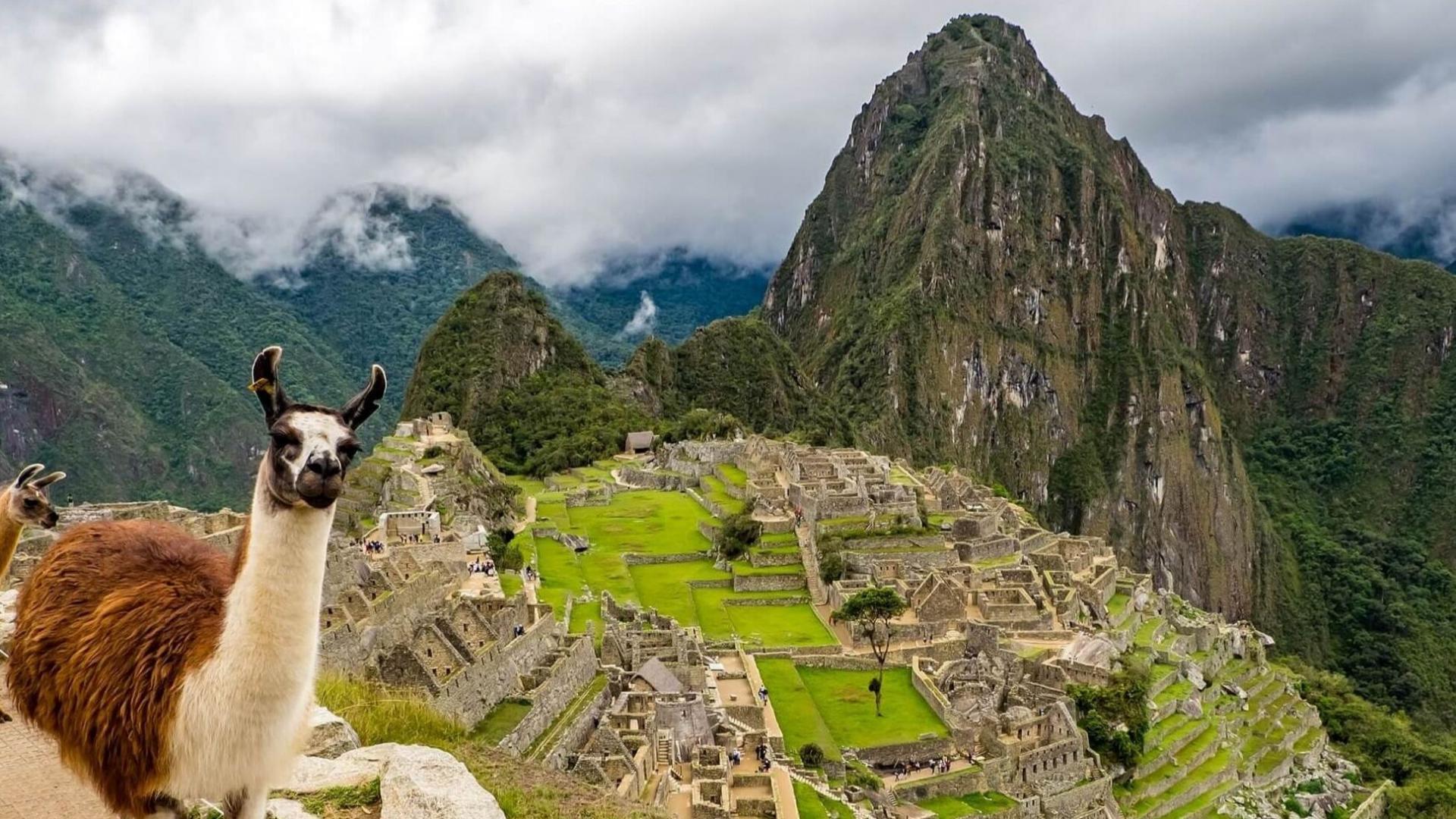 Susipažinkite su alpaka - dažnai sutinkama Peru gyventoja