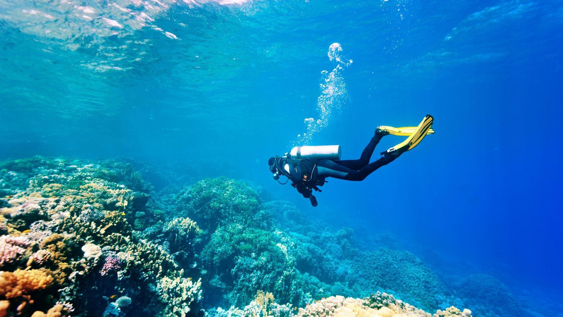 Kelionėje į Keniją leiskitės į nardymo nuotykį šiltame Indijos vandenyne