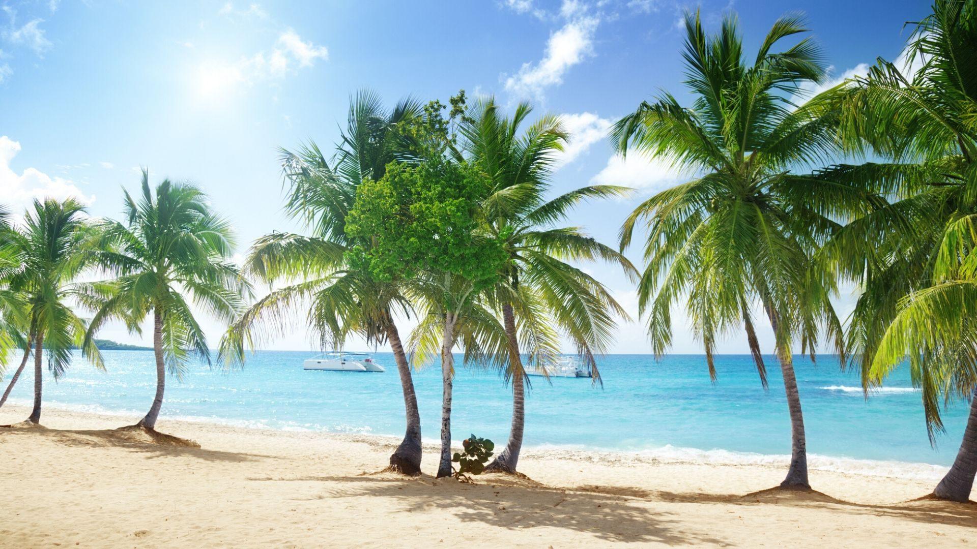Kokosų palmės nuostabioje Katalinos saloje