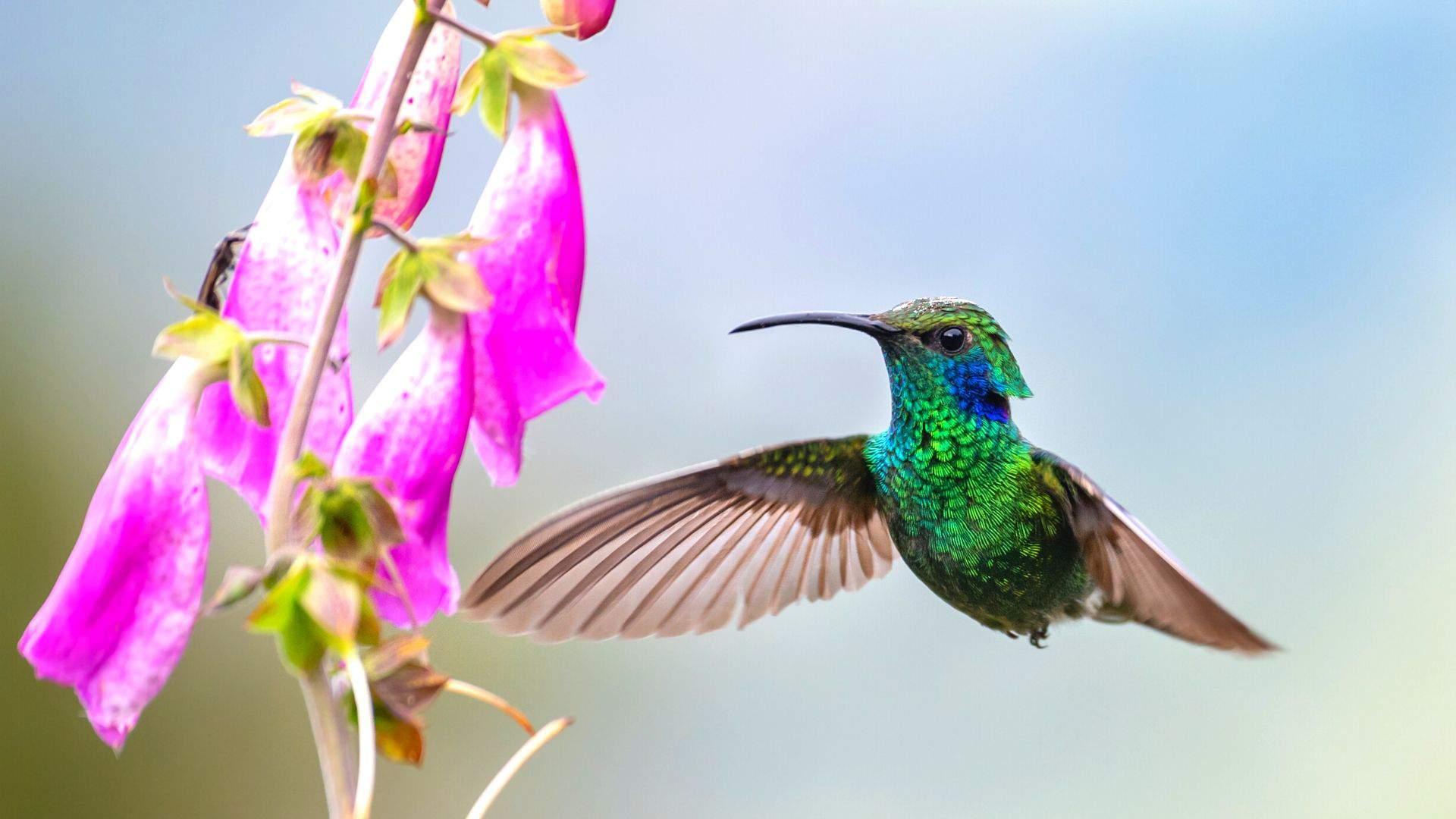 Kosta Rika - daugelio retų paukščių gimtinė