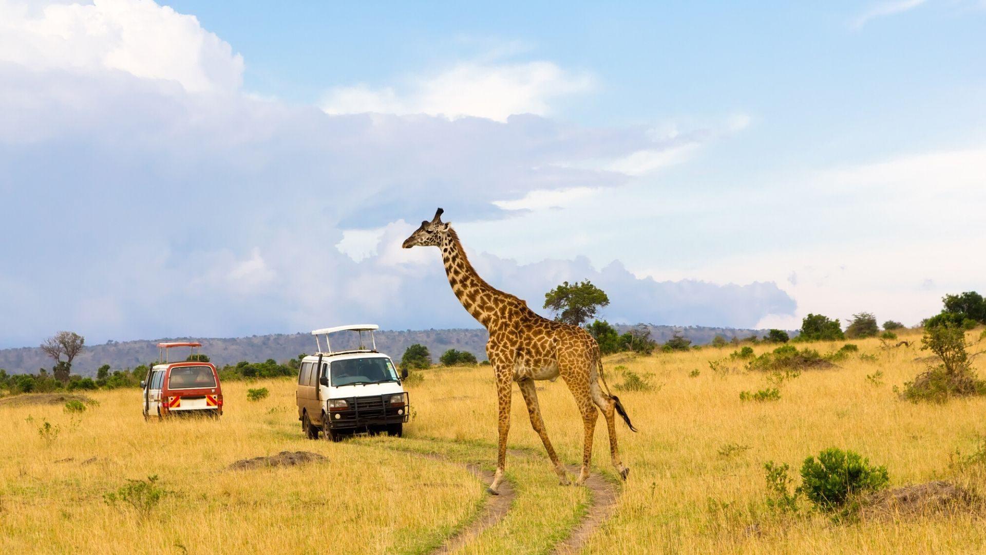 Leiskitės į safarį ir pamatykite laukinę Afriką