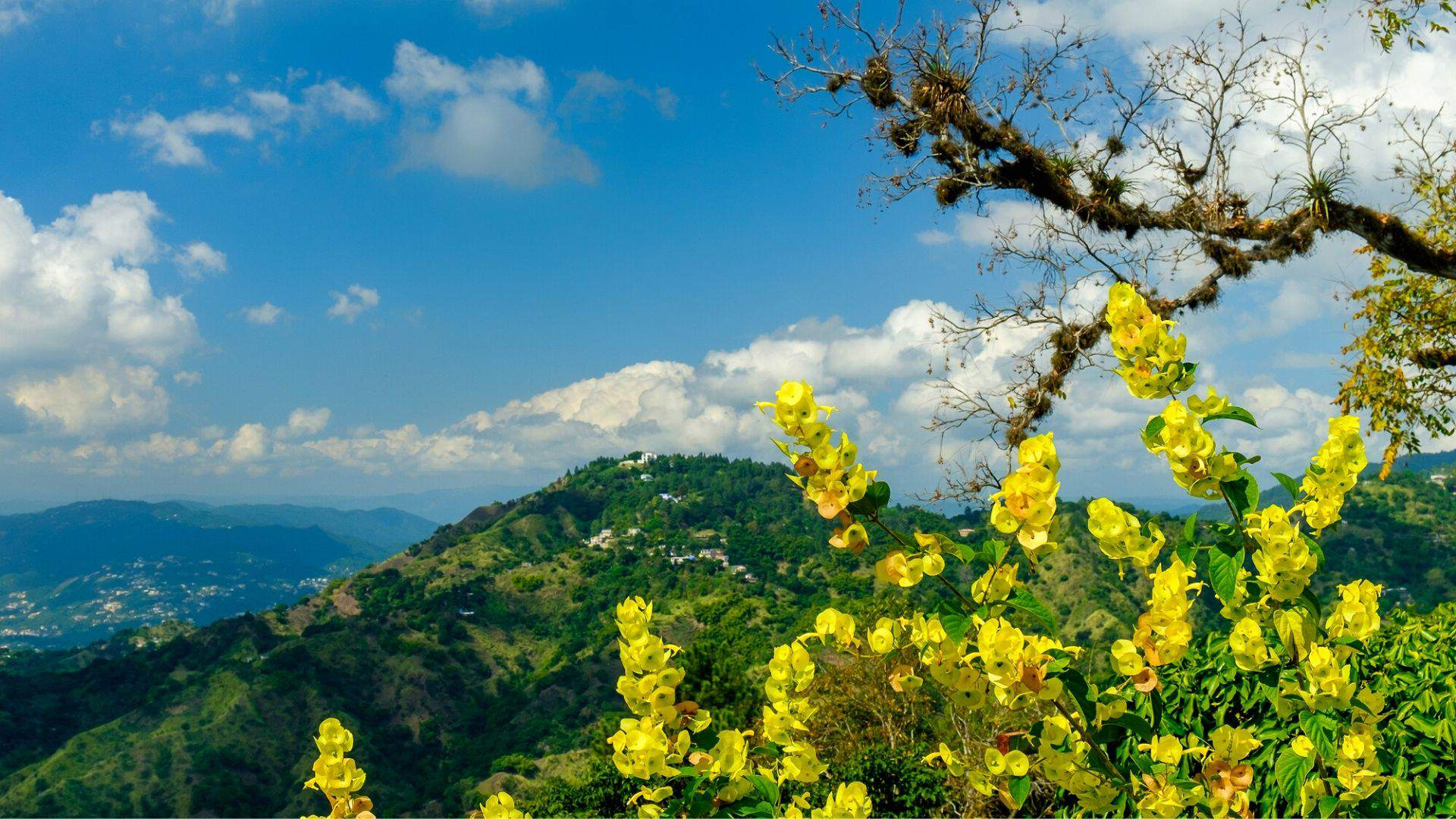 Mėlynieji kalnai Jamaikoje