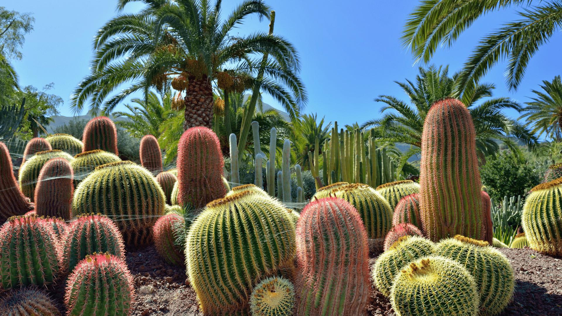 Nepraleiskite progos pamatyti kaktusų sodo