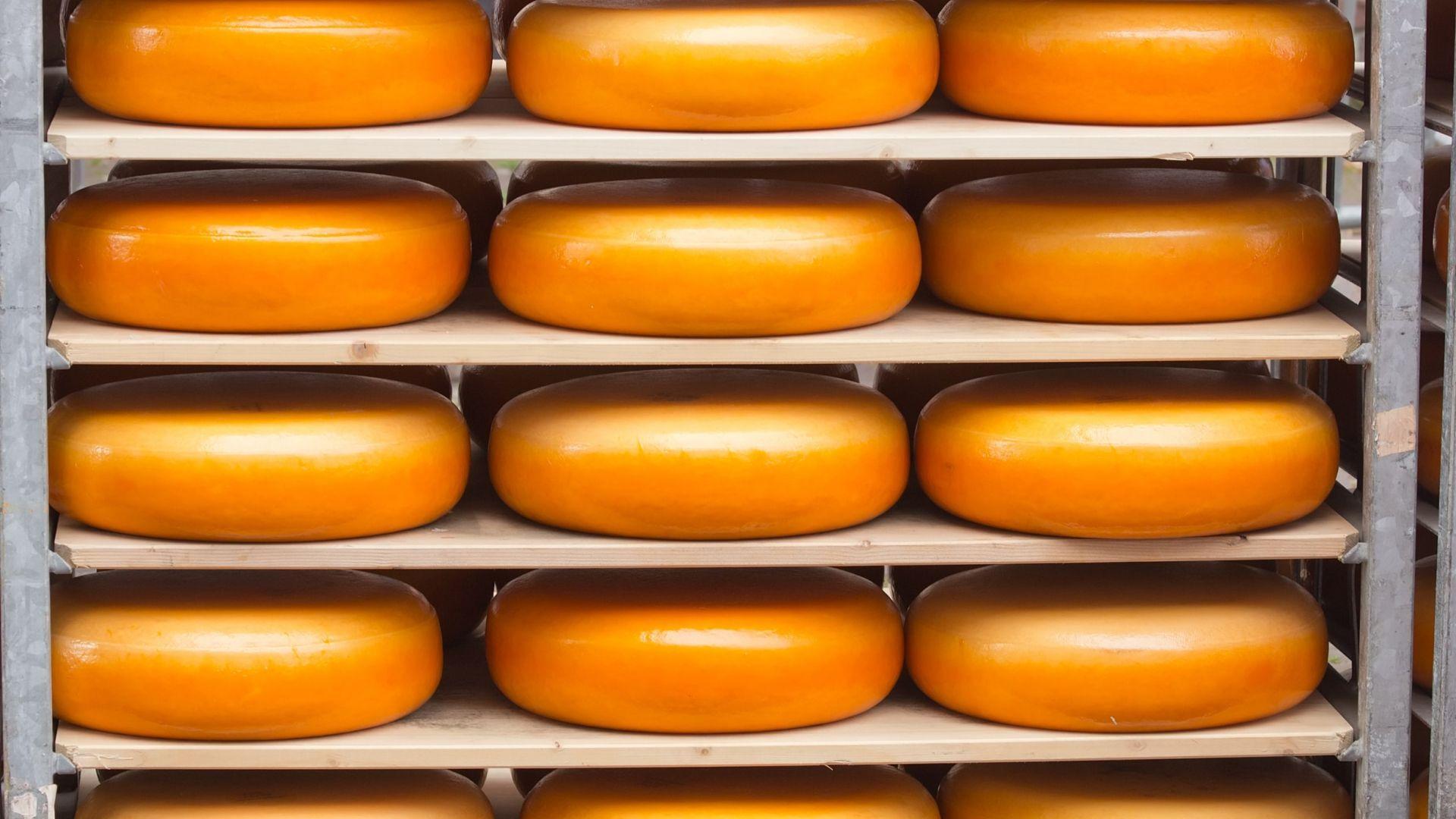 Olandija garsėja savo gurmaniškais sūriais