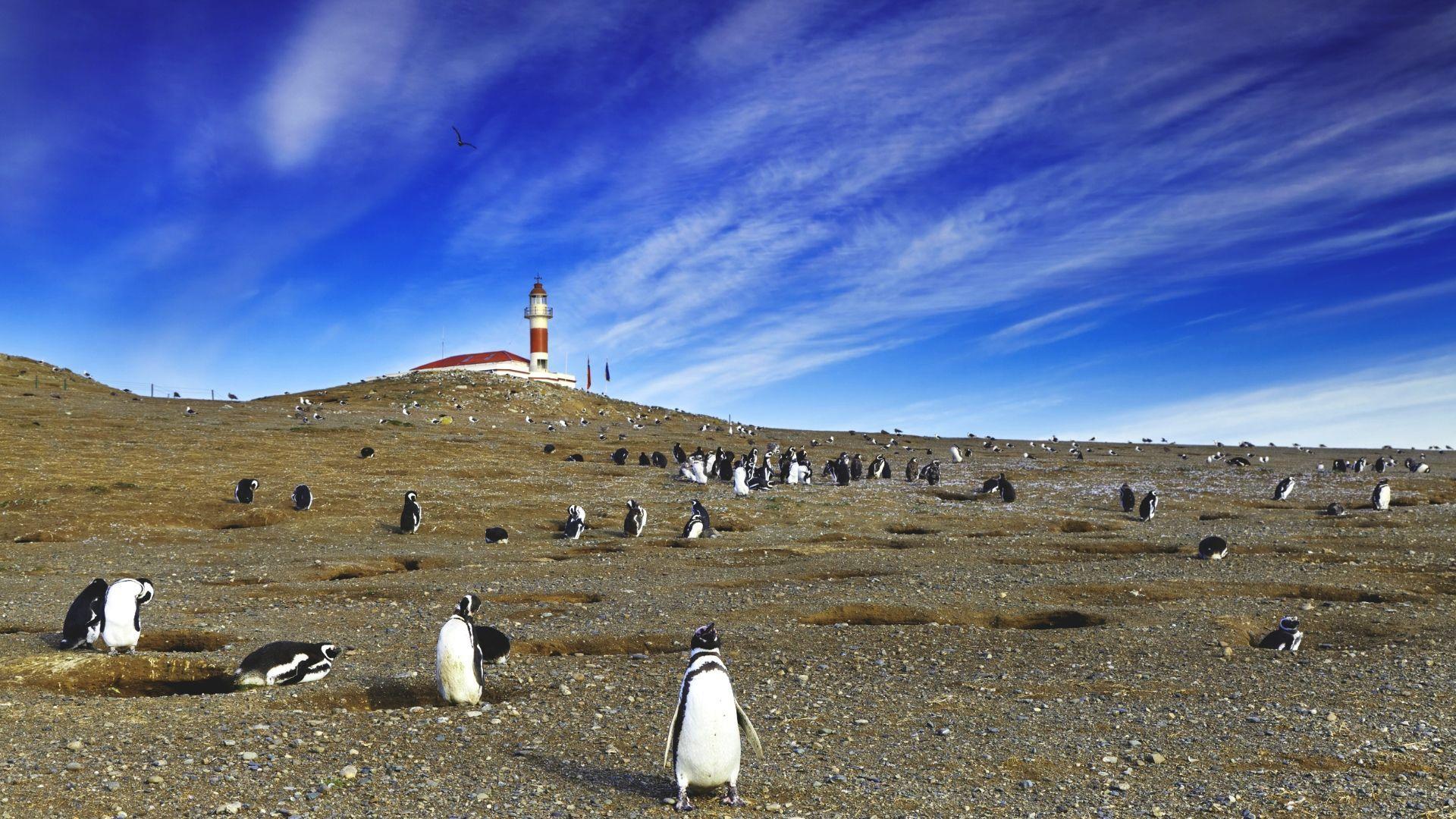 Pamatykite be galo mielus magelaninius pingvinus