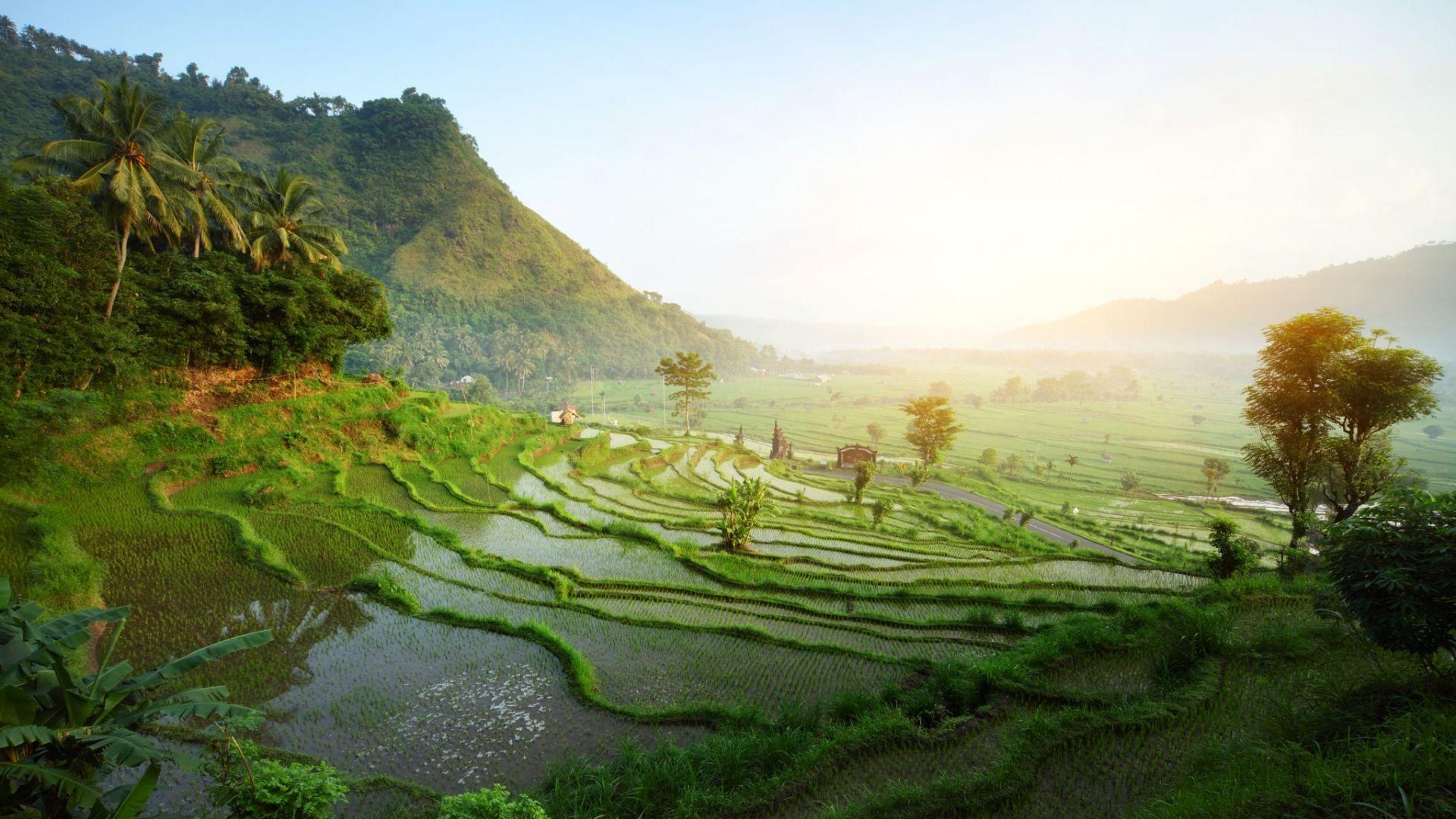 Saulės nušviestos ryžių terasos