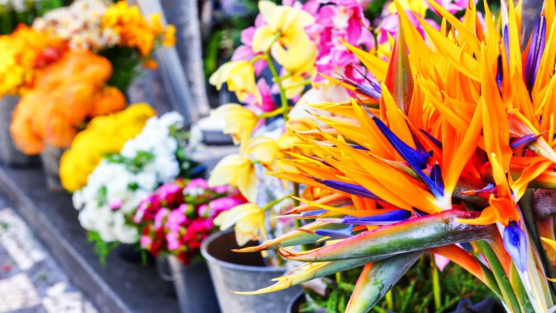 Pasivaikščiokite po Madeiros gėlių turgų