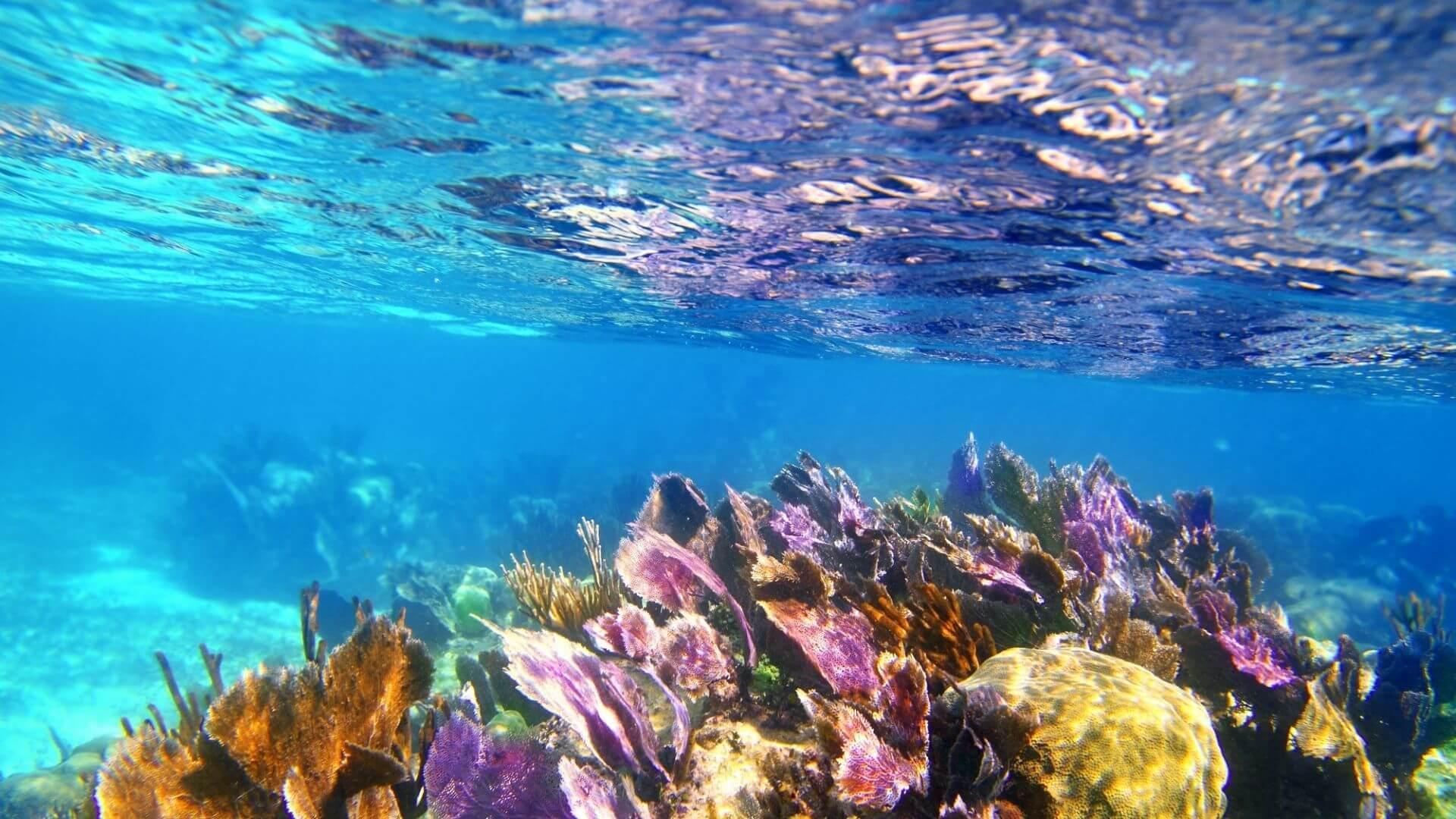 Spalvotas Karibų jūros povandeninis pasaulis