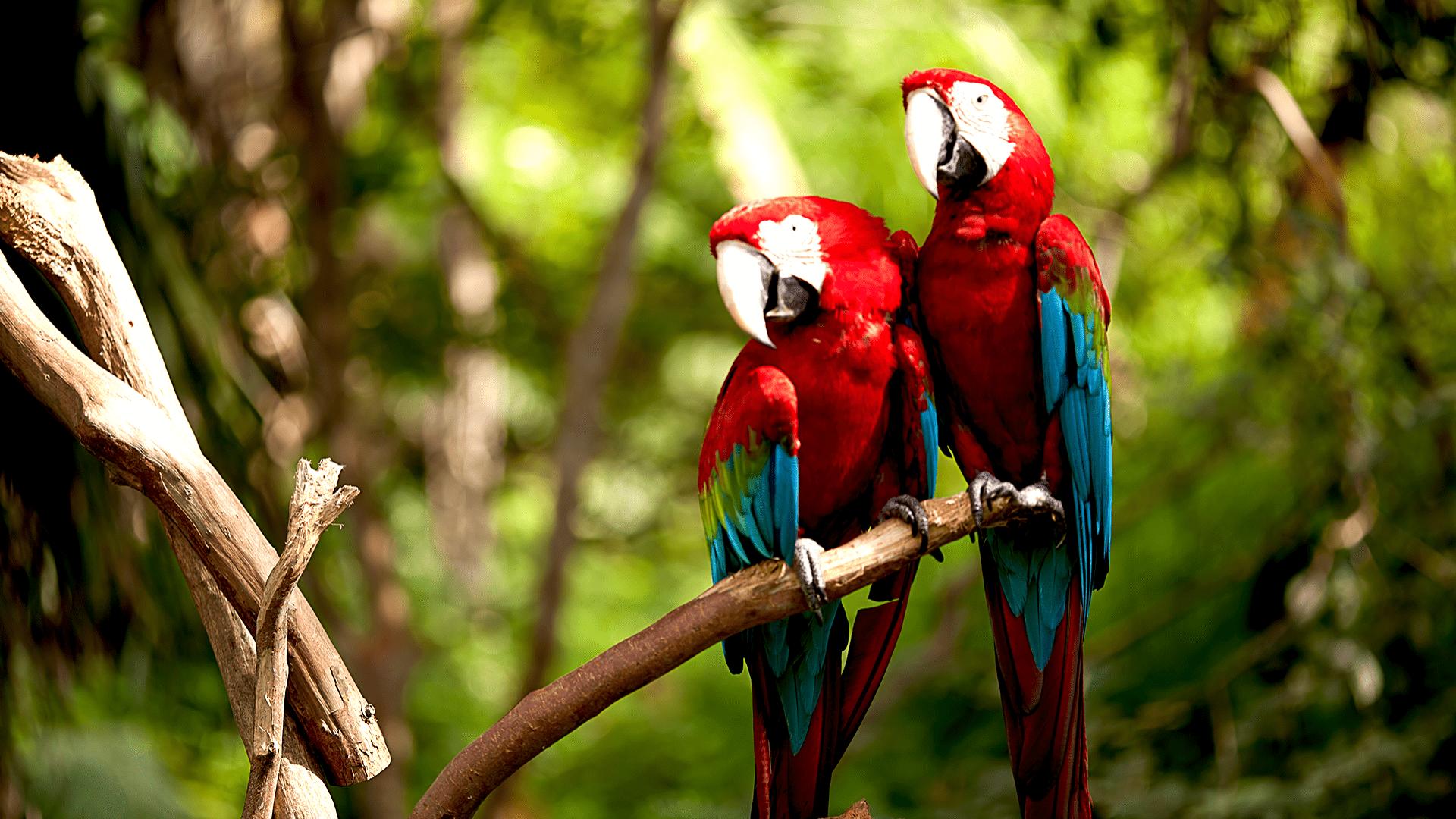 Susipažinkite su džiunglių fauna
