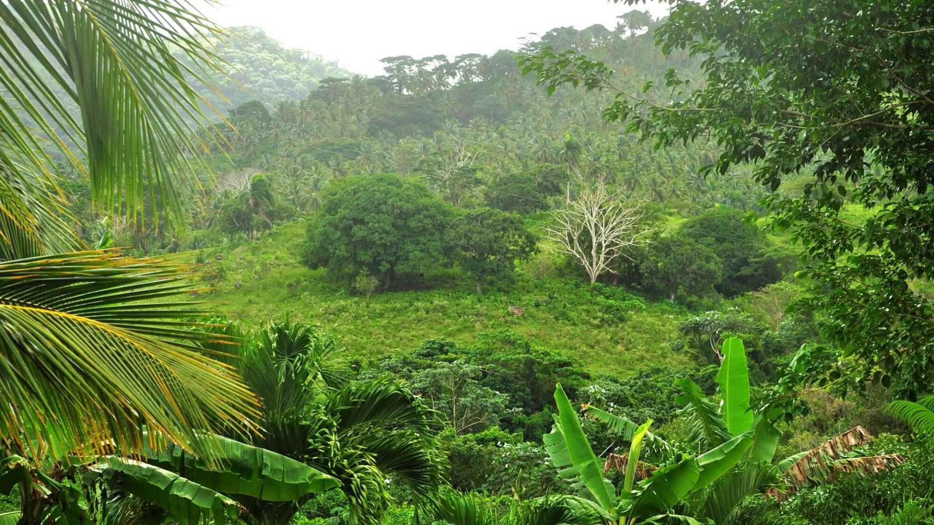 Tropinė augalija Dominikos Respublikoje