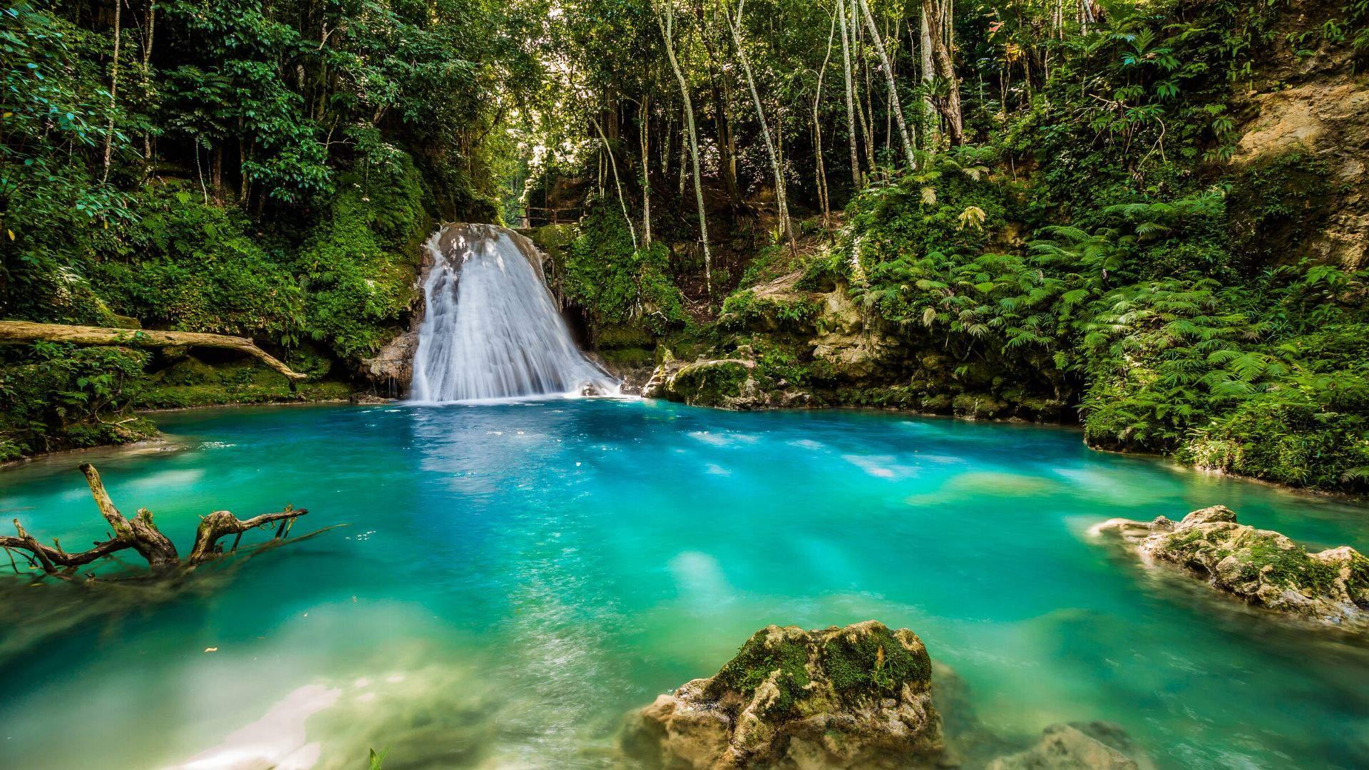 Užburianti Jamaikos gamta