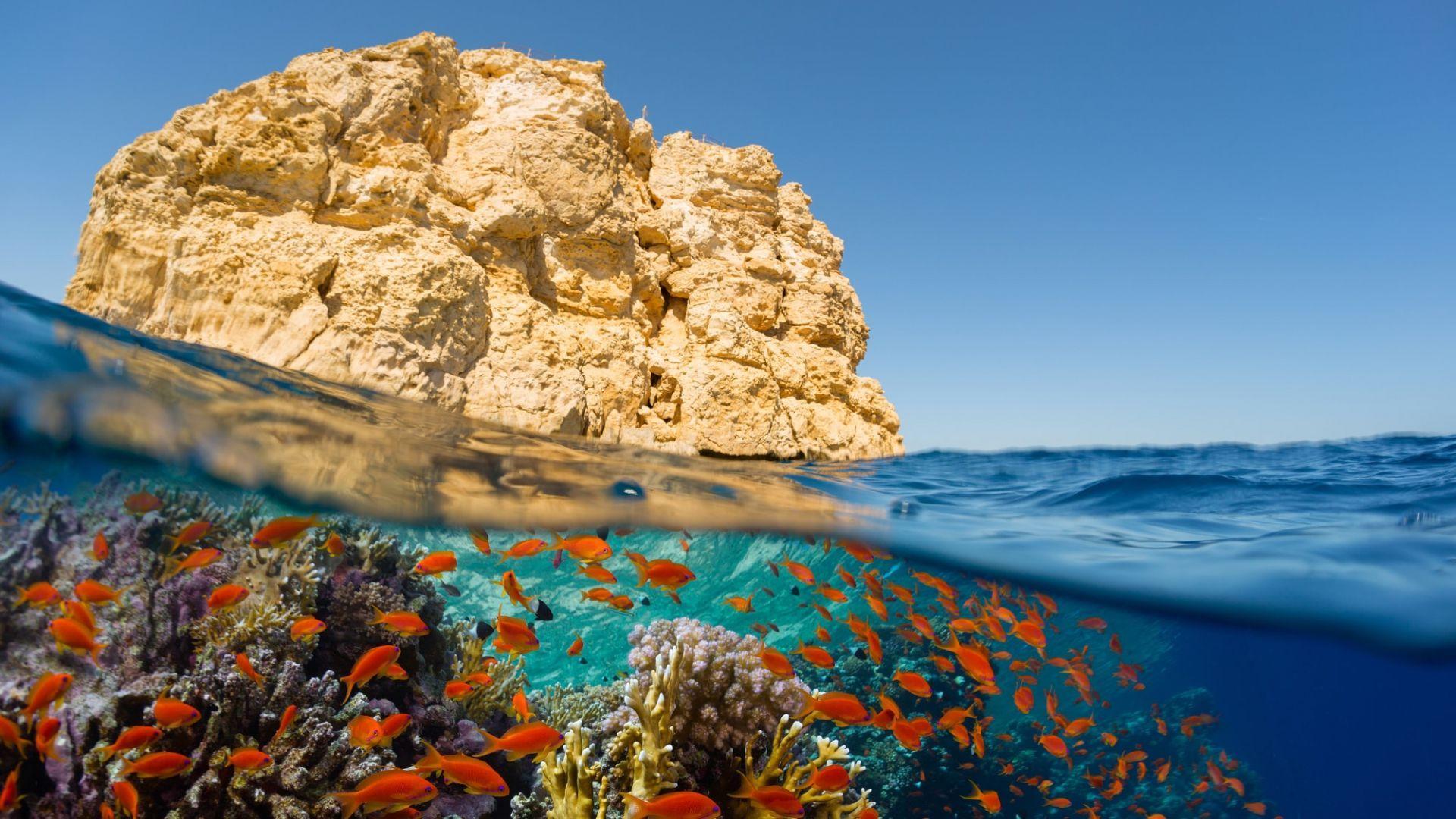Raudonoji jūra